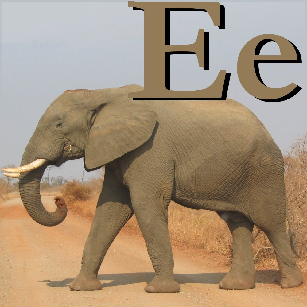 FileE Is For Elephant