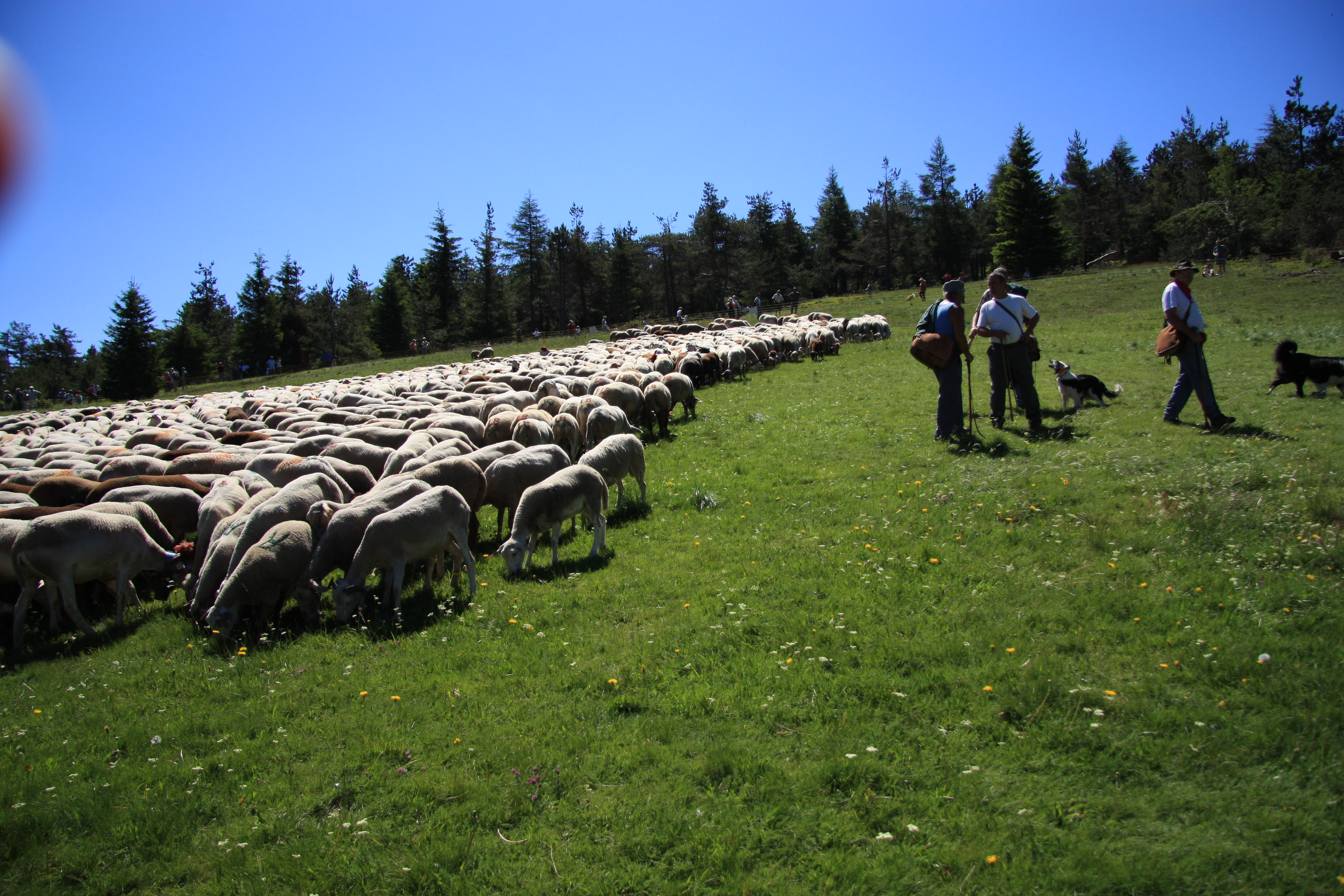 File:France Gard Lu0027Espérou Fête De La Transhumance 2009 1227