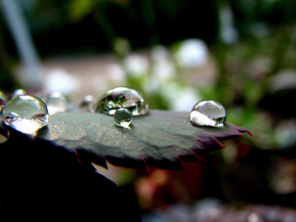 Garden_In_A_Drop_%28273134290%29.jpg
