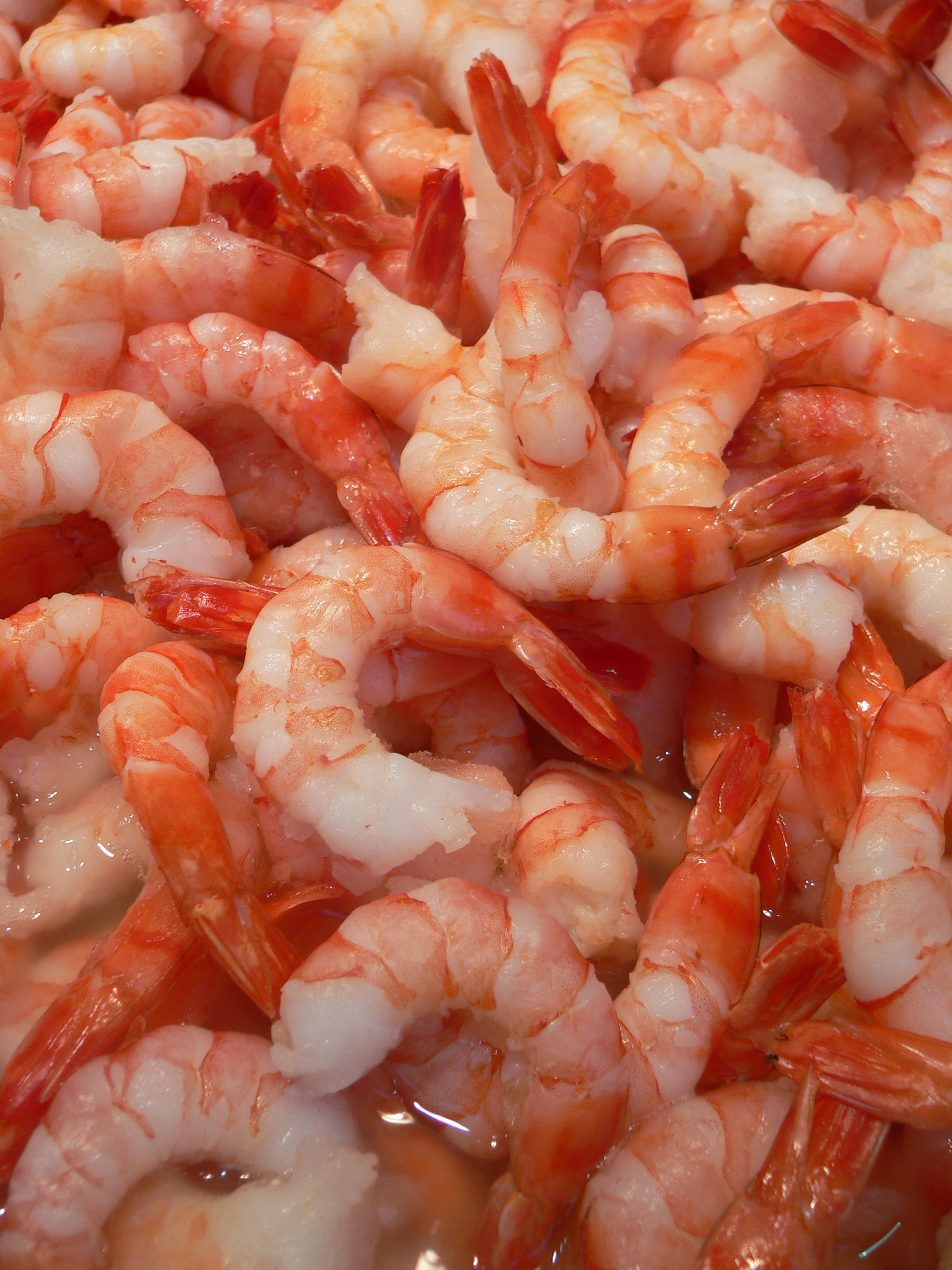sustainable charleston sc shrimp