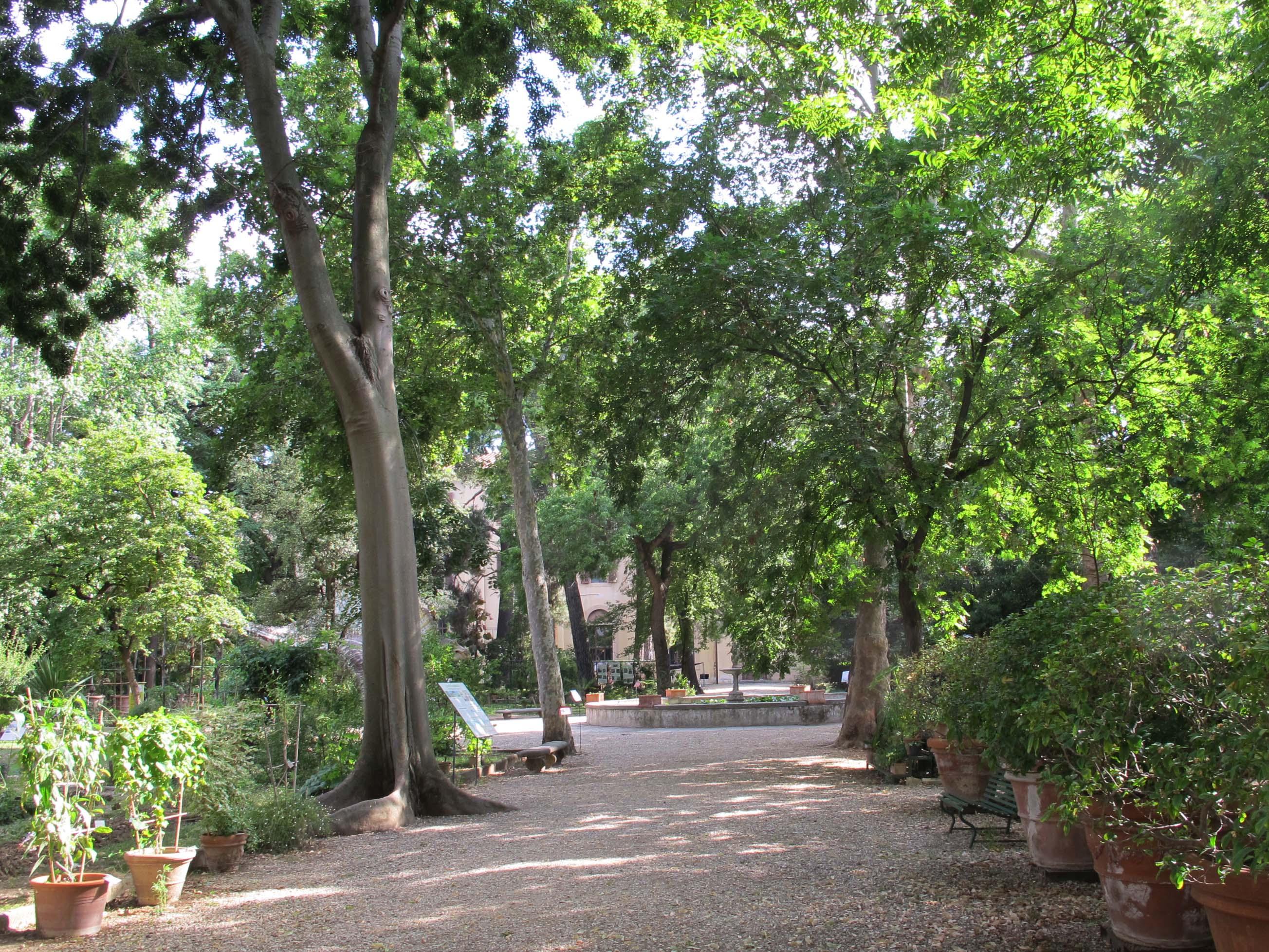 file giardino dei semplici vialetto jpg wikimedia commons