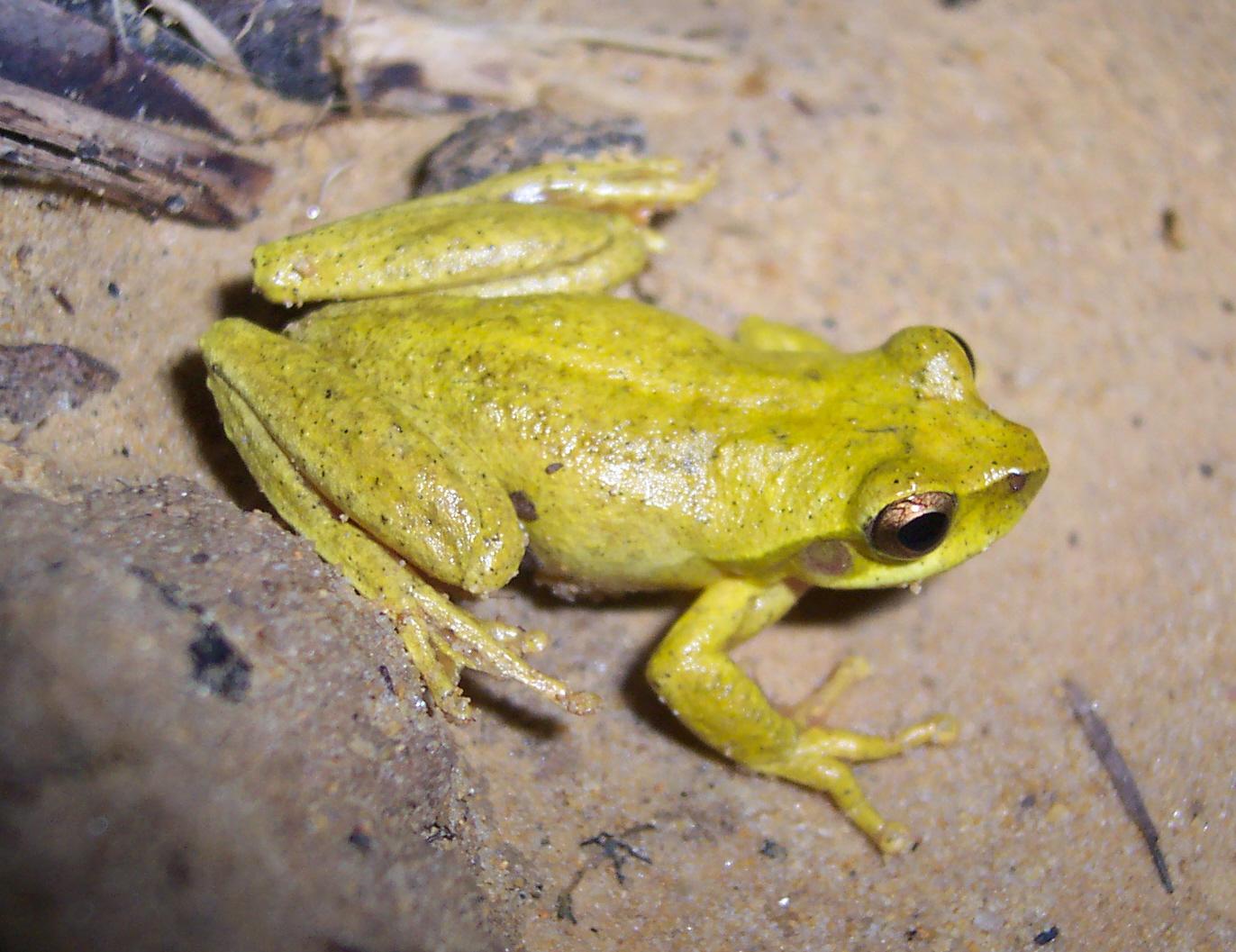 V Frog Kpm Revealed frog -...
