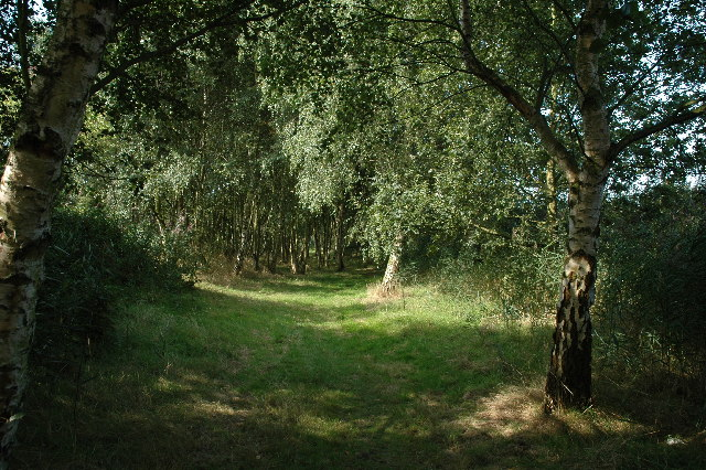 File:Moore Nature Reserve - geograph.org.uk -  48792.jpg