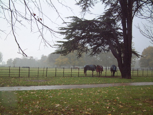 Osterley Park - geograph.org.uk - 86321