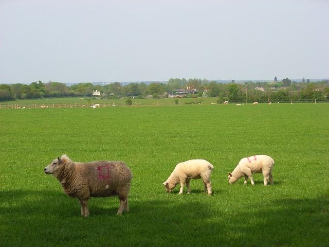 File:Pasture, Braywoodside - geograph.org.uk - 799047.jpg