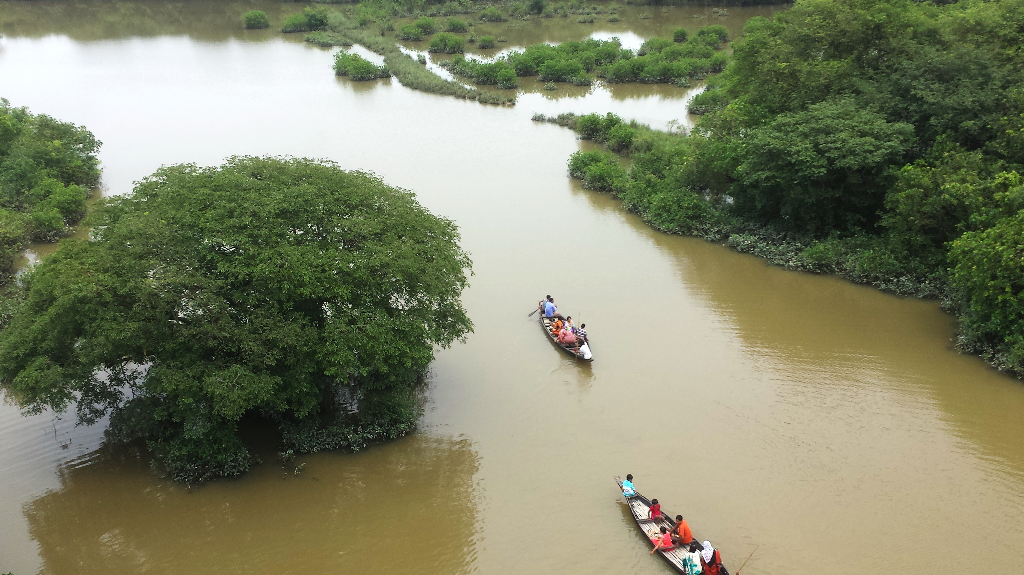 Image result for সোয়াম্প ফরেস্ট রাতারগুল