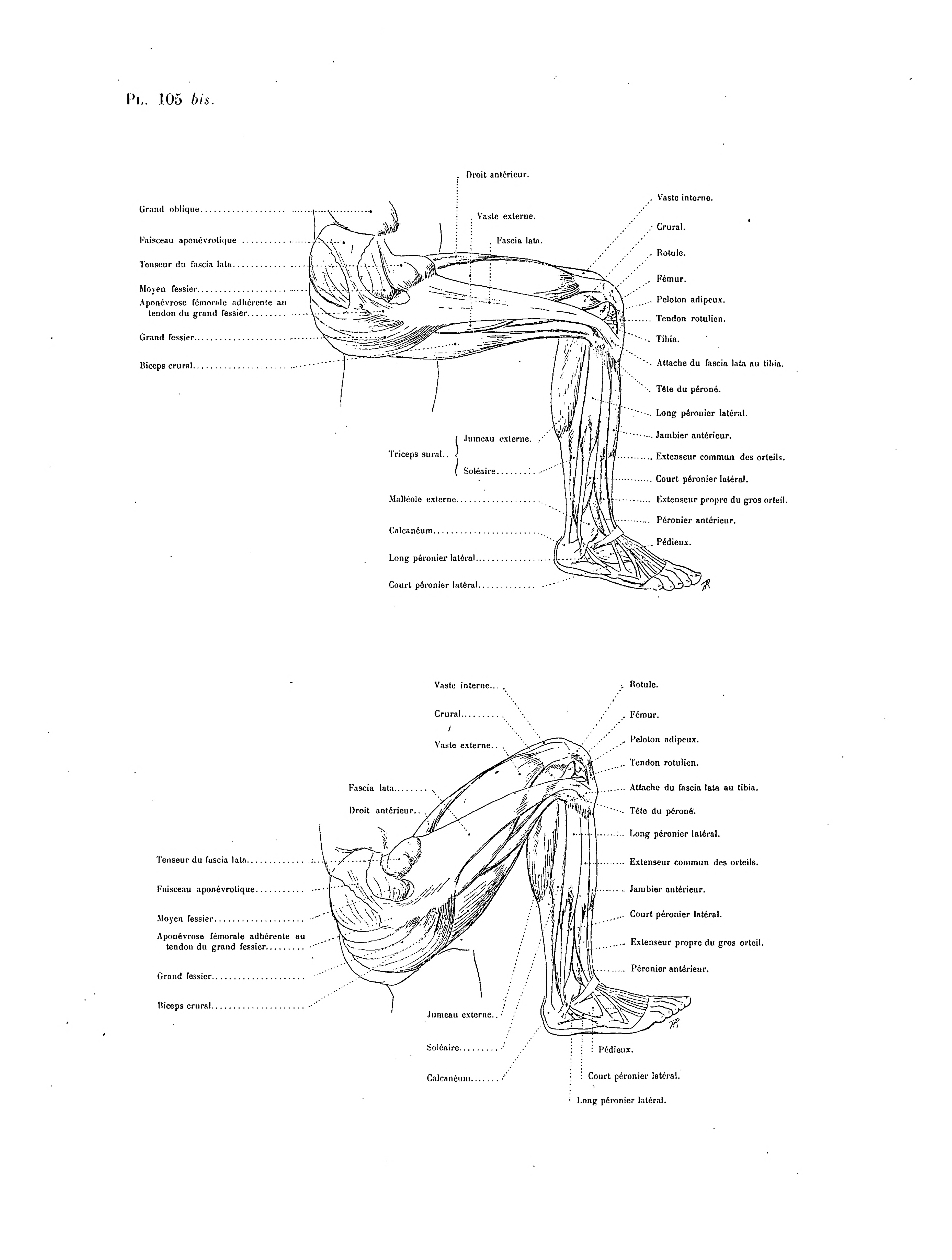 File:Richer - Anatomie artistique, 2 p. 141.png - Wikimedia Commons