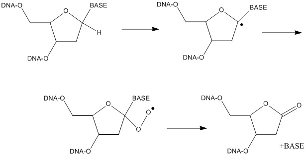 File:Route of deoxyribonolactone formatio.jpg