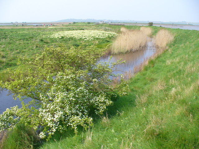 Sea Wall at Oare Marshes - geograph.org.uk - 421078
