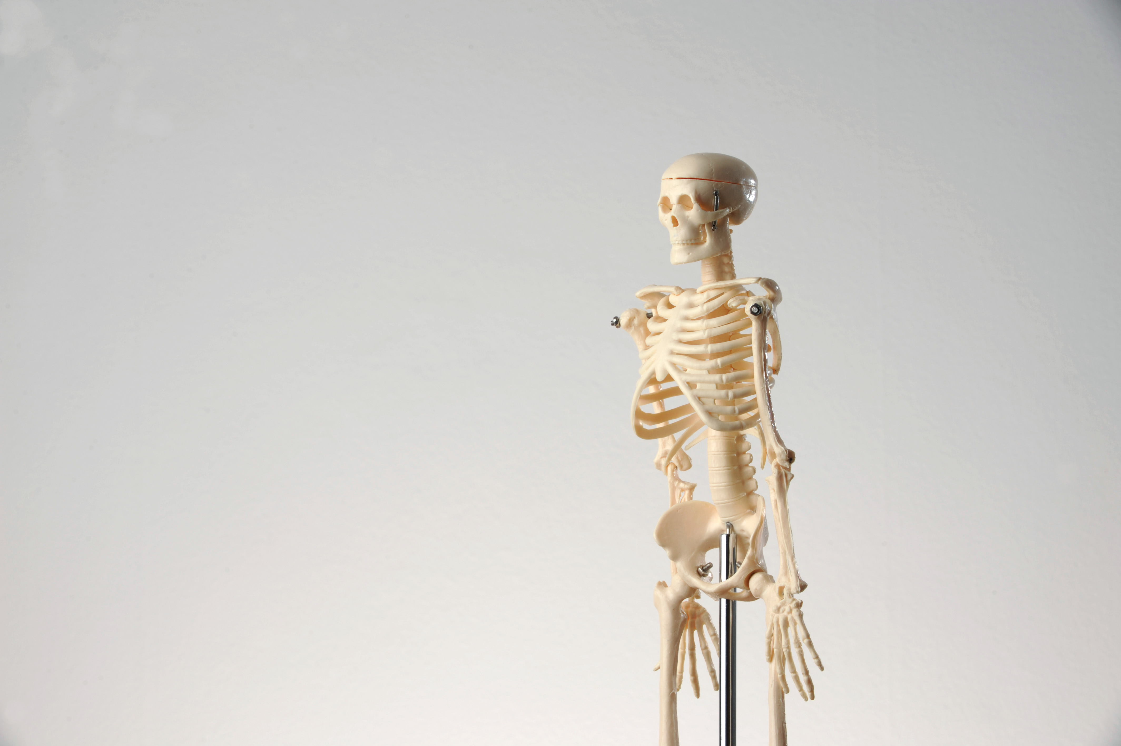 Erfreut Skelett Pic Fotos - Anatomie Ideen - finotti.info