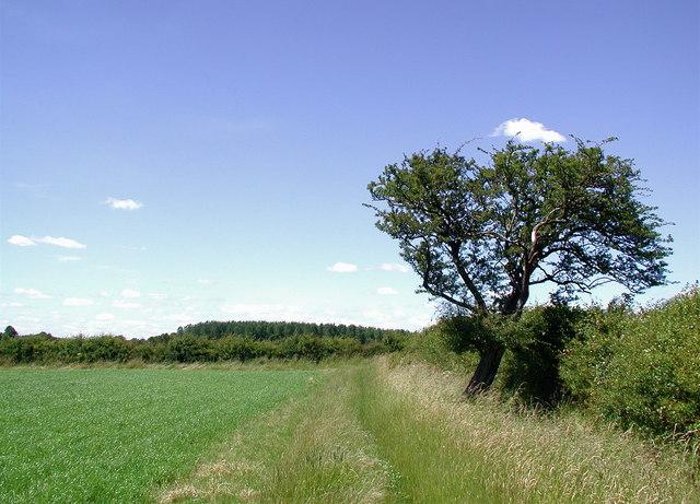 The Wanderlust Way, Brigsley - geograph.org.uk - 873372