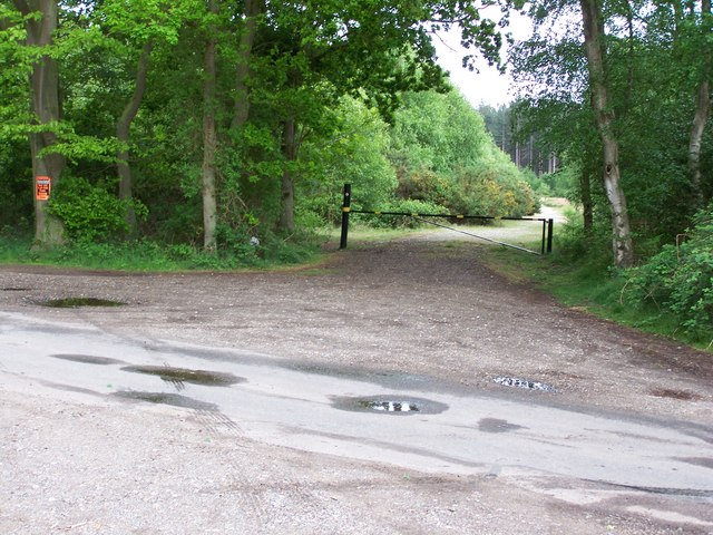 The depths of Dunwich Forest - geograph.org.uk - 432357