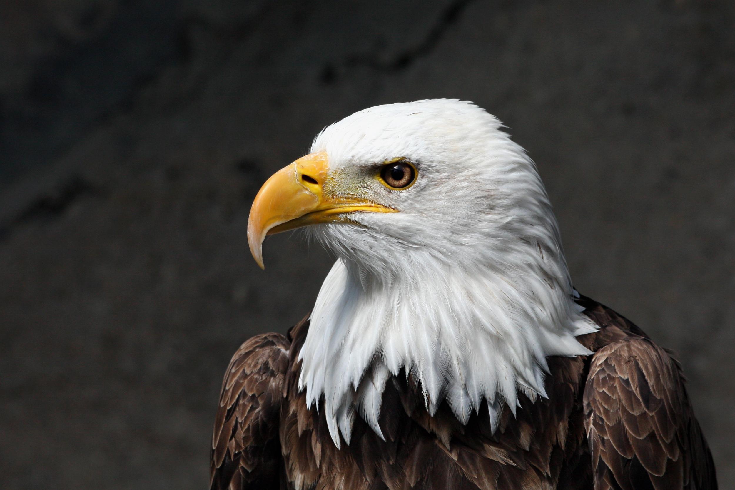 American Eagle Black Slip On Shoes
