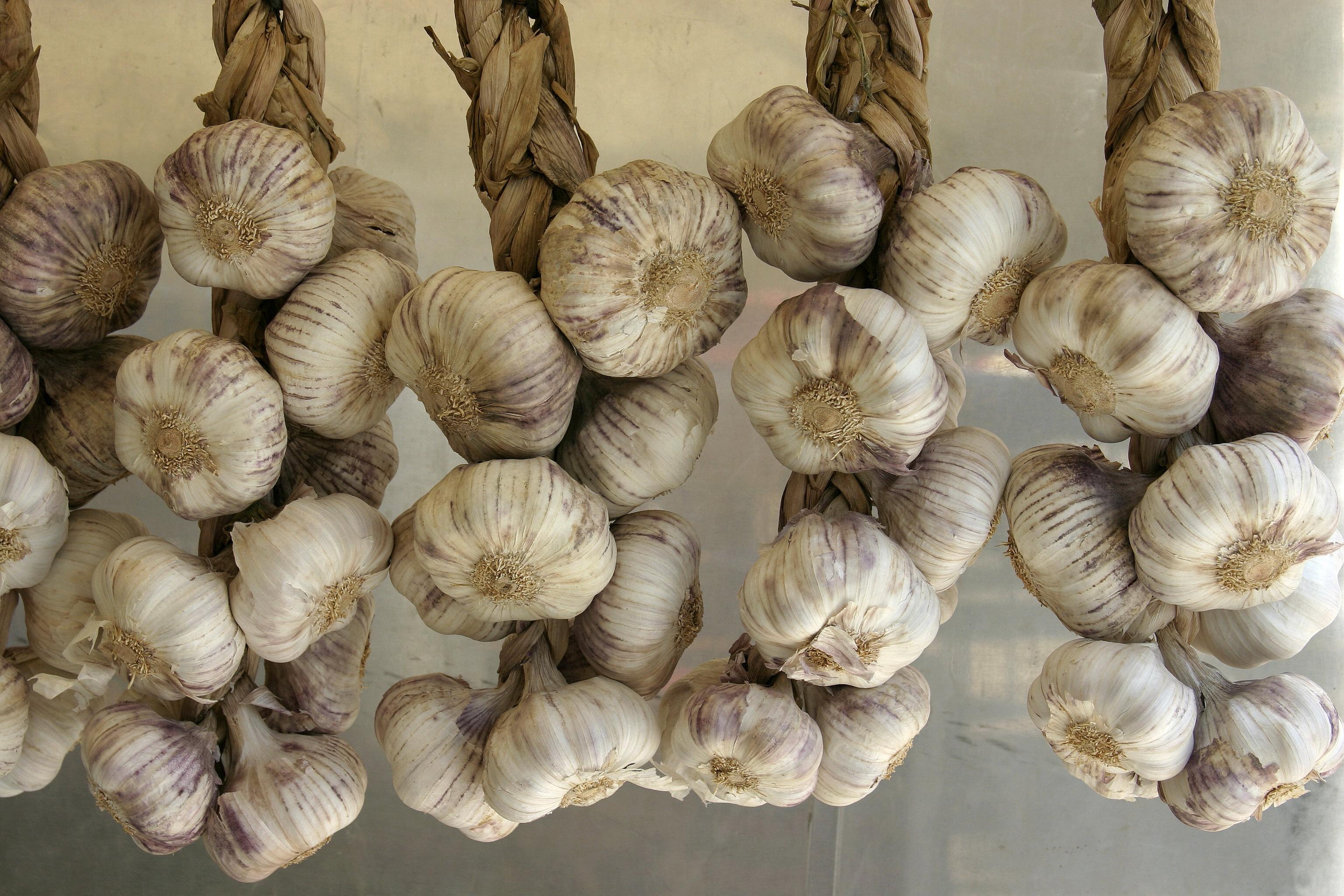 Garlic: 11 Facts & Trivia | CAROLYN'S COMPOSITIONS