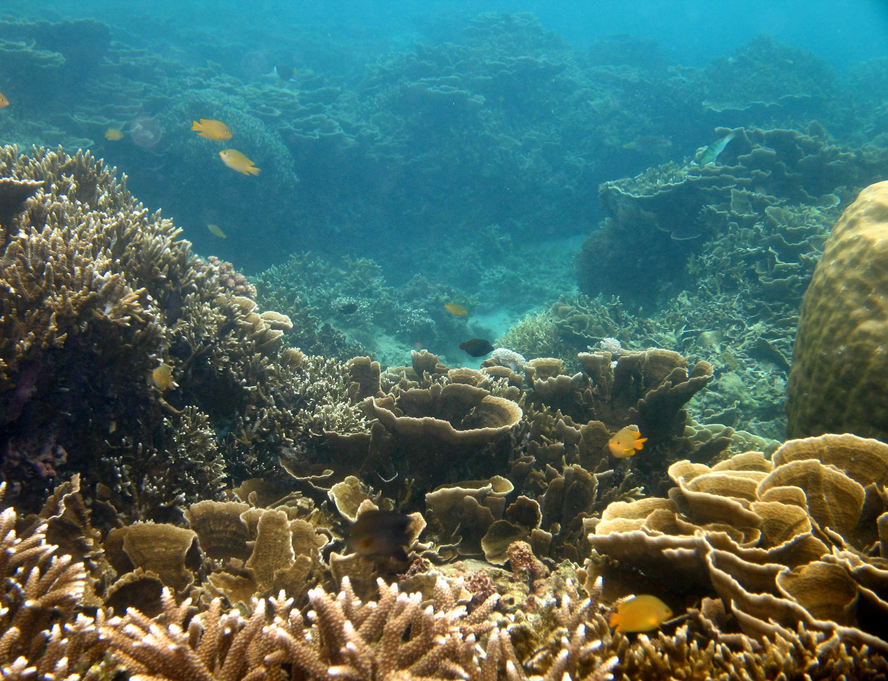File:Beautiful coral reef, Batangas, Anilao - panoramio ...
