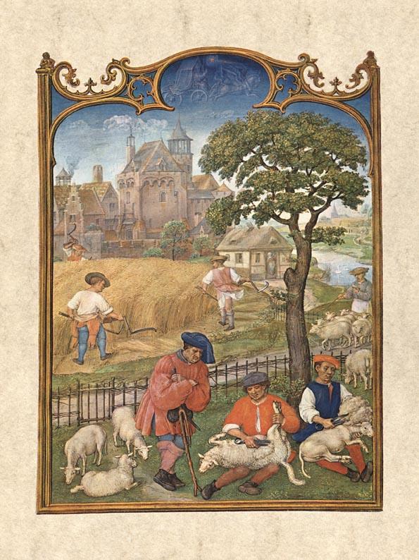 Getreideernte und Schafschur: Monatsbild Juli im Breviarium Grimani , um 1510. Venedig, Biblioteca Marciana.