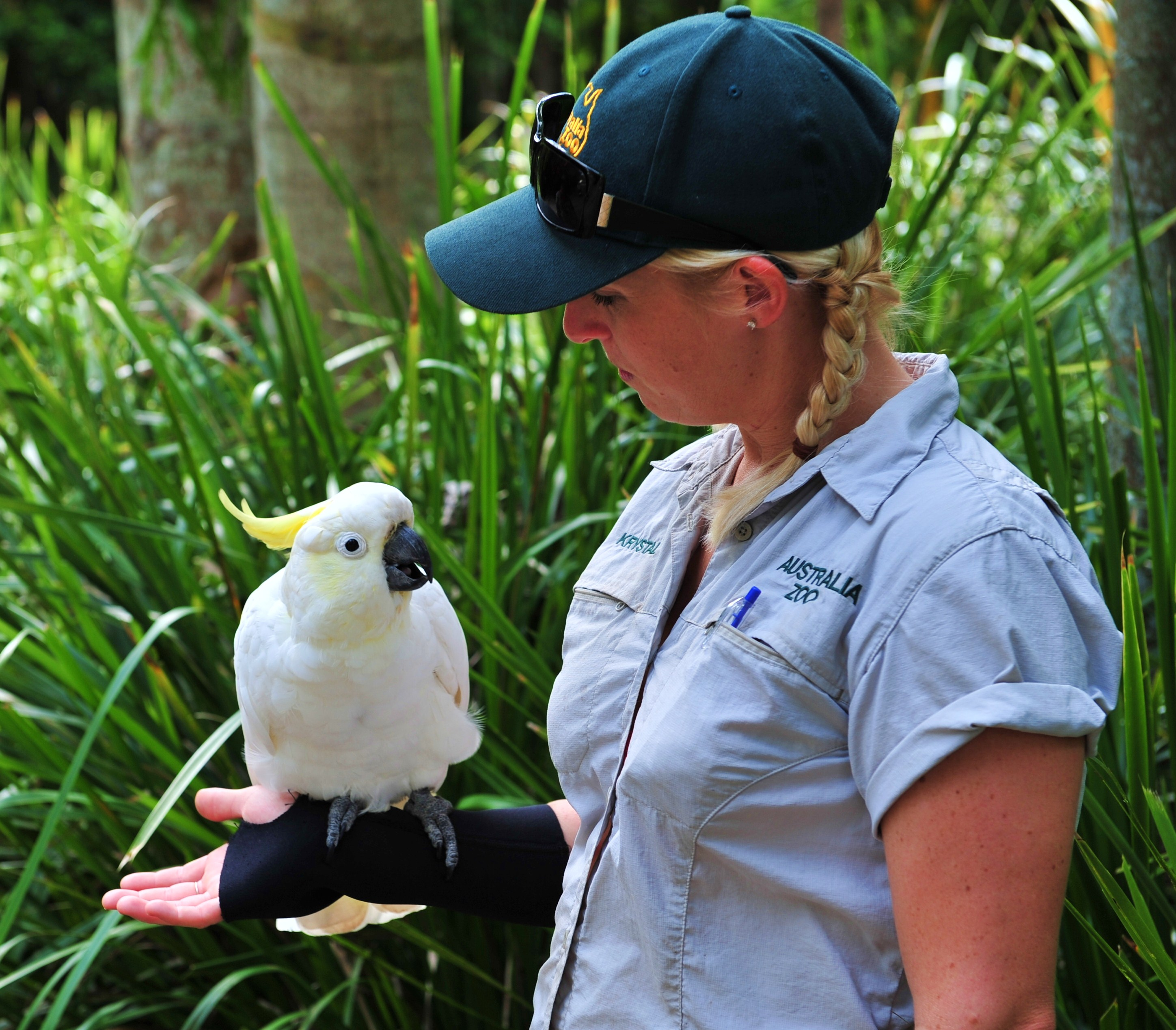 A  modern zoo keeper fashion (Australia Zoo, Queensland, source: Wikimedia Commons)