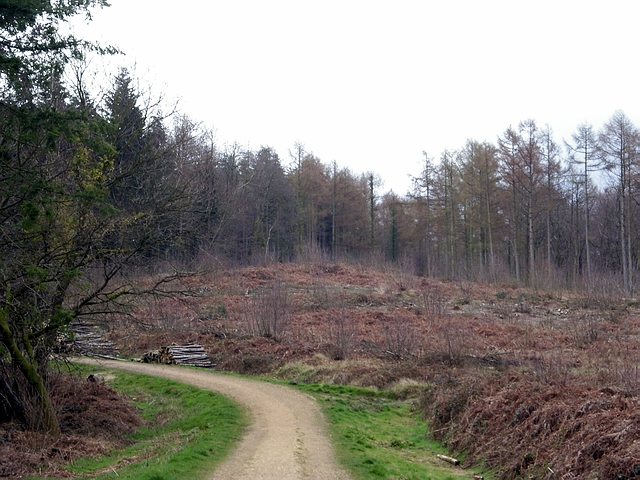 Clearing in Stoke Park Wood, Bishopstoke - geograph.org.uk - 148294