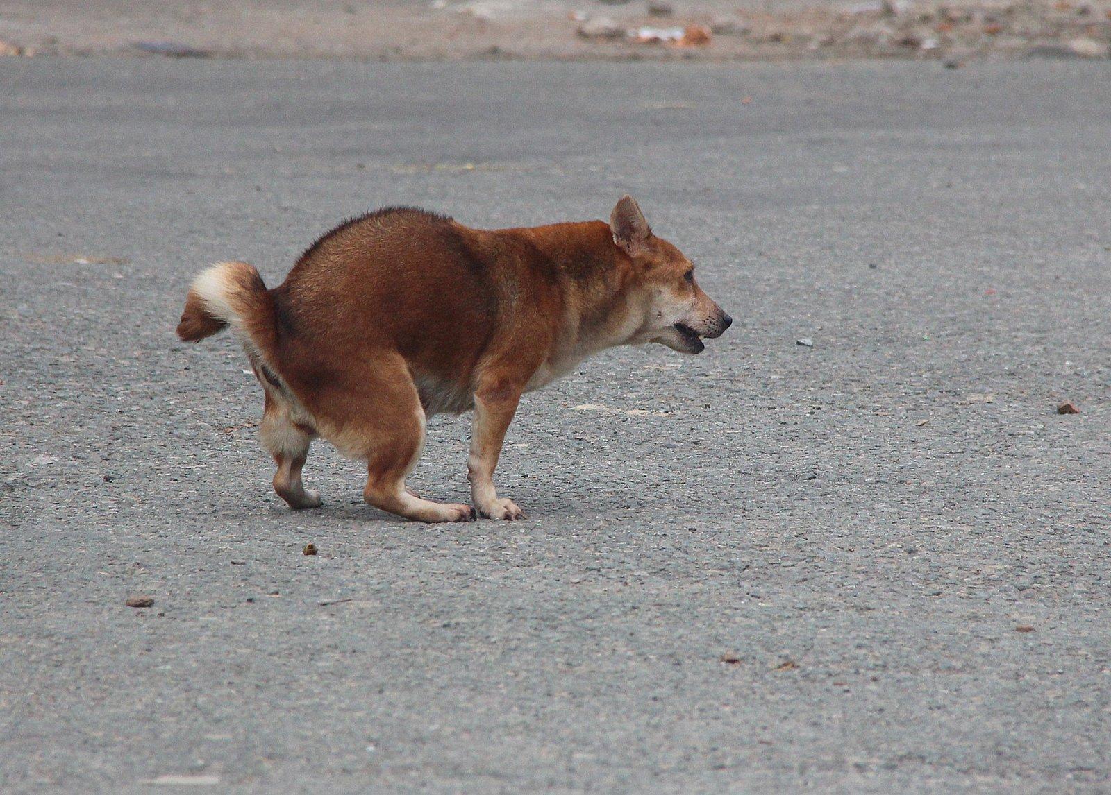 Một con chó ở Việt Nam