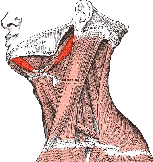 Les entraînements au traitement du dos
