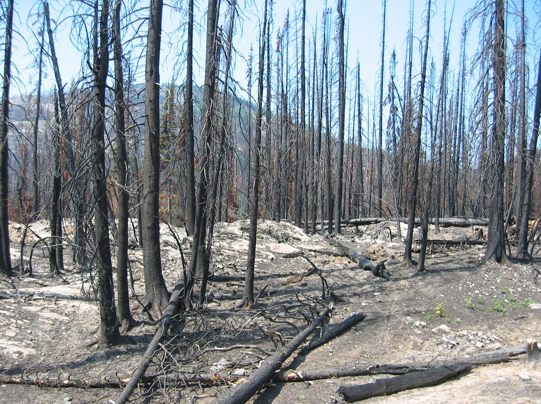 fileforest fire aftermathjpg wikimedia commons