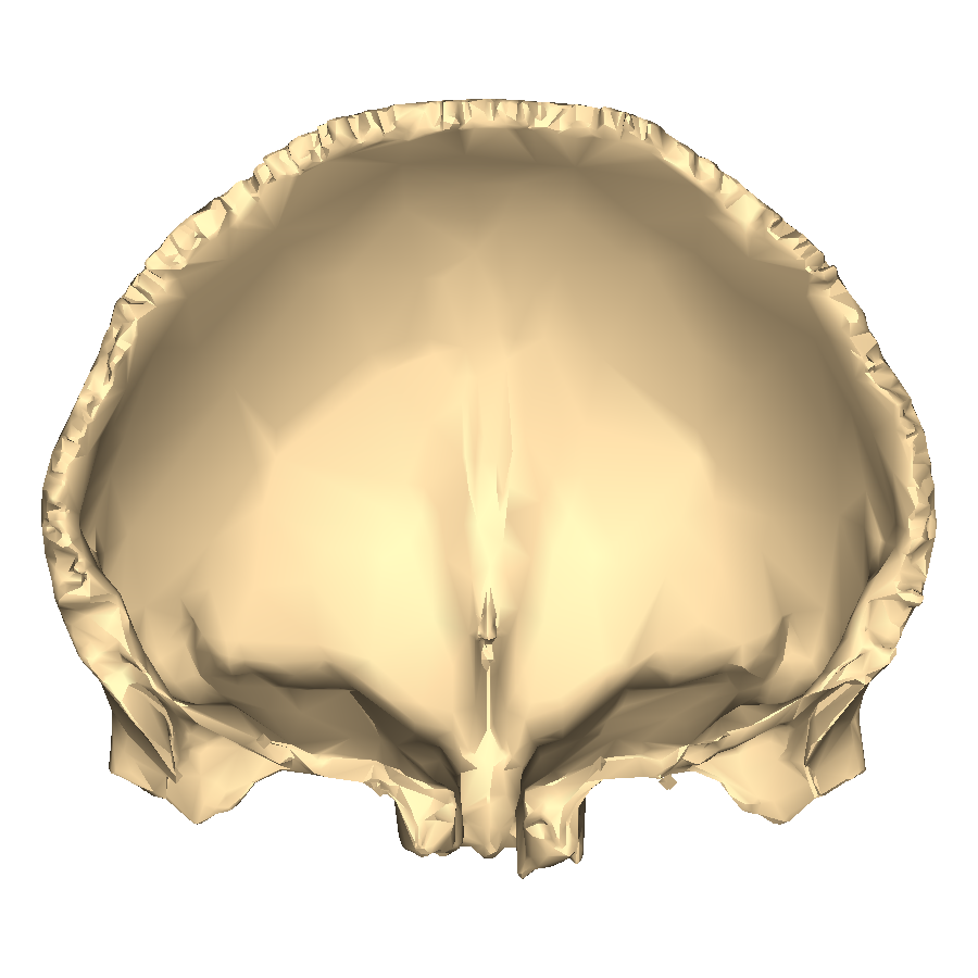 File:Frontal bone close-up posterior.png - Wikimedia Commons