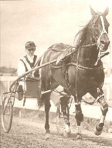 Johnny Globe New Zealand Standardbred racehorse