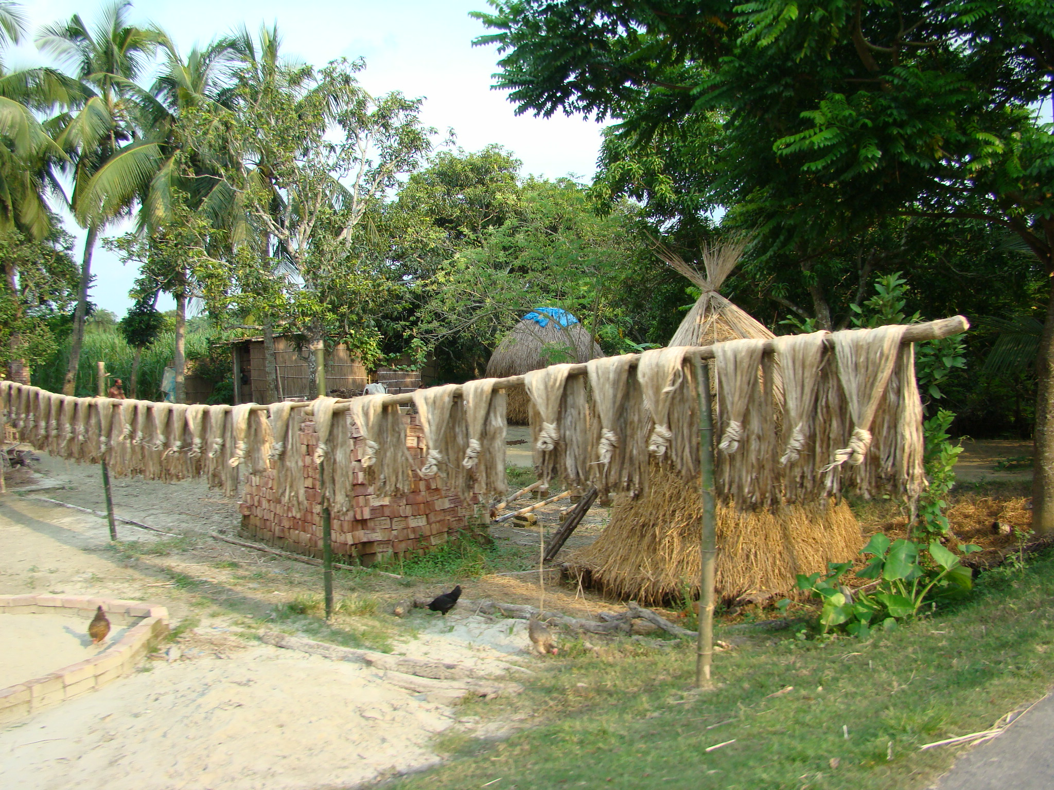 File:Jute Cultivation and Processing Bangladesh.JPG - Wikimedia ...