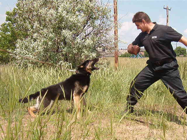Levit-Dog-Training.JPG