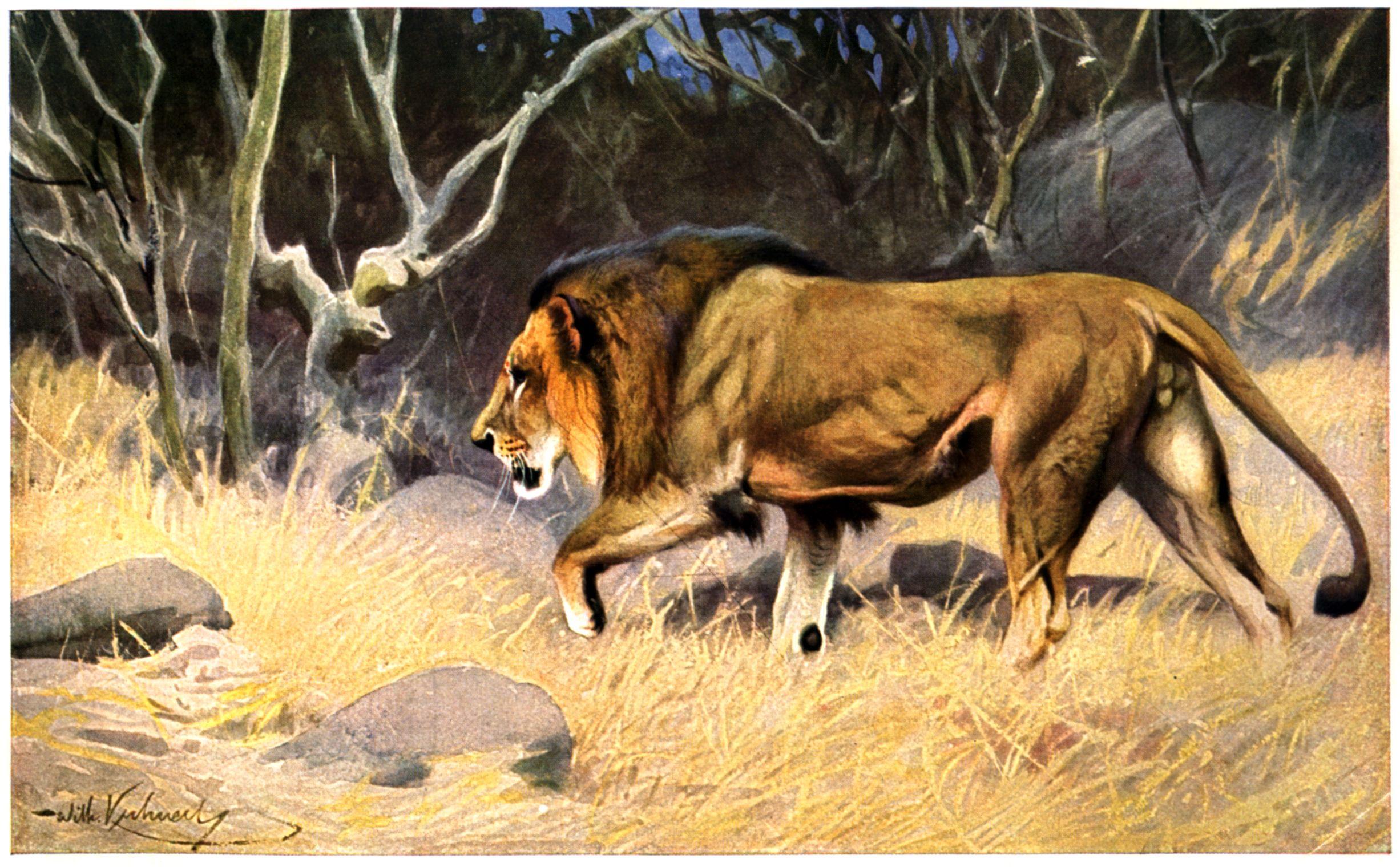 http://upload.wikimedia.org/wikipedia/commons/2/26/Loewe-painting.jpg