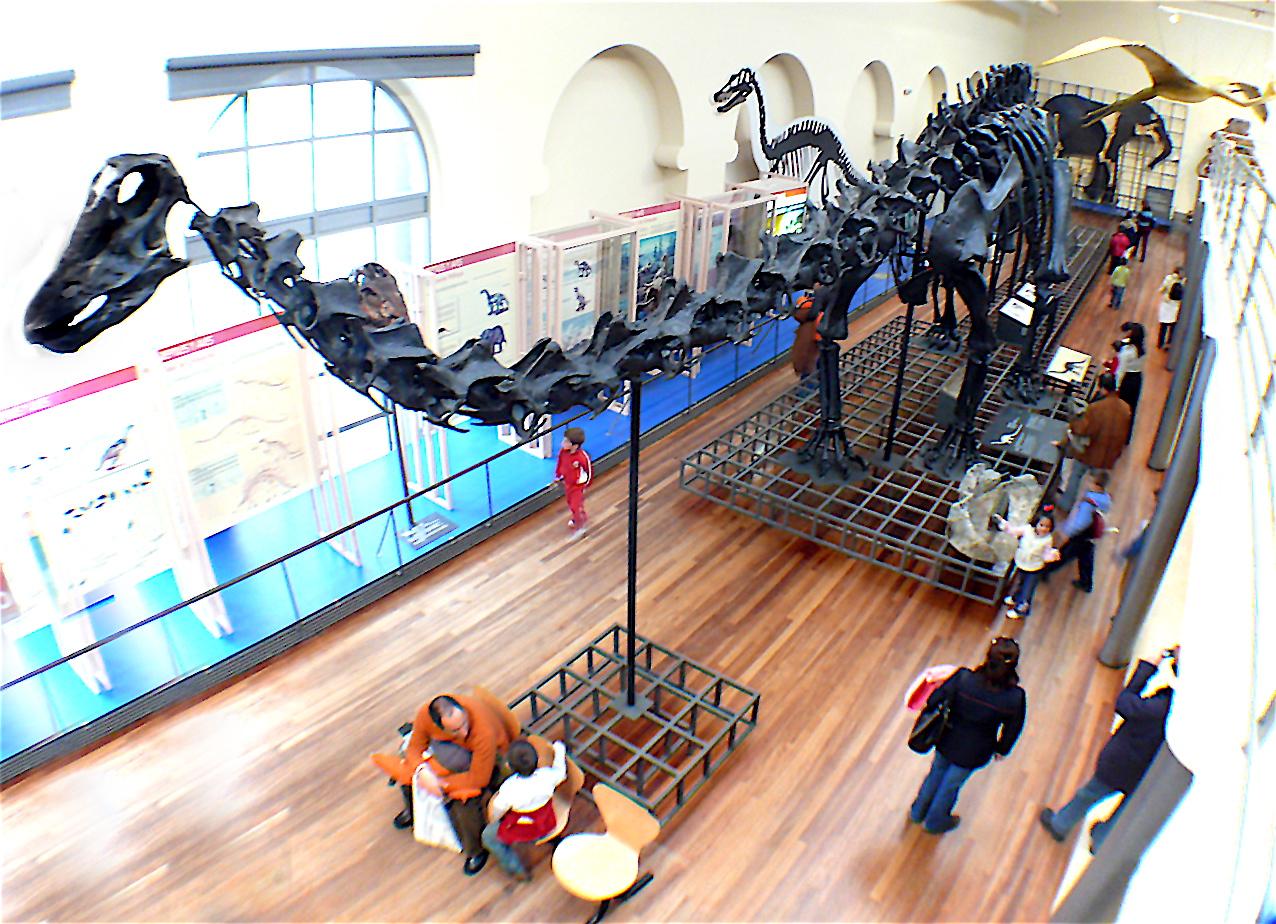 Archivo museo nacional de ciencias naturales madrid sala for La casa de granada en madrid