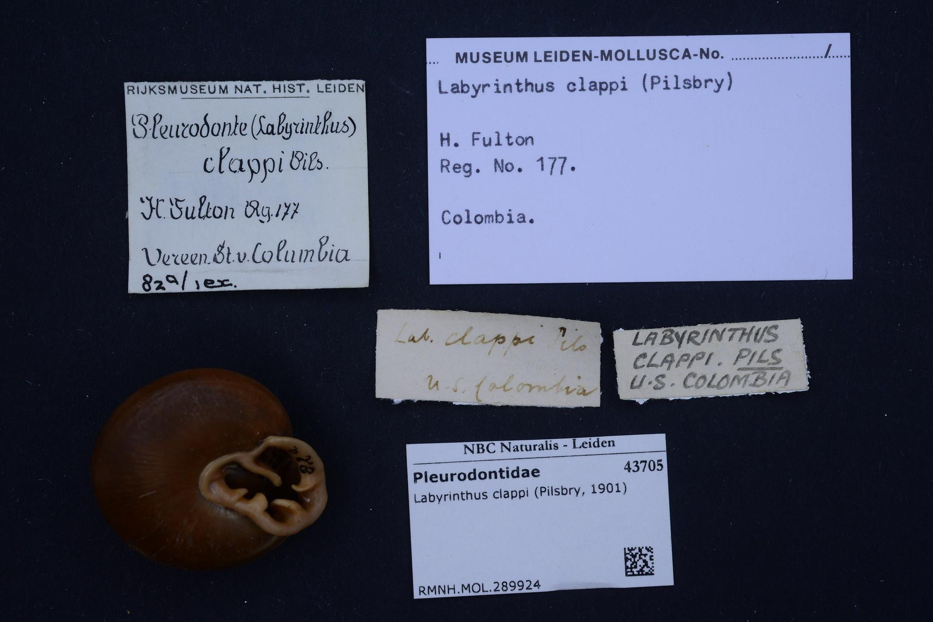 File:Naturalis Biodiversity Center - RMNH MOL 289924
