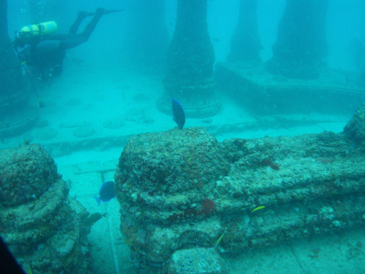Image result for Neptune Memorial Reef