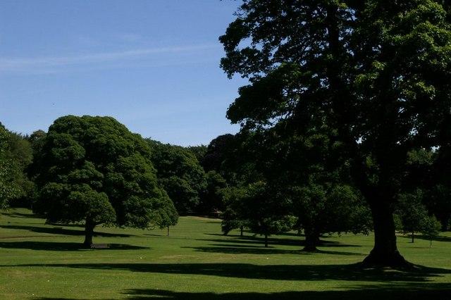 Parkland in Camperdown Park - geograph.org.uk - 902134