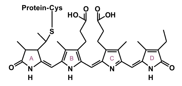 File:Phycocyanobilin.png