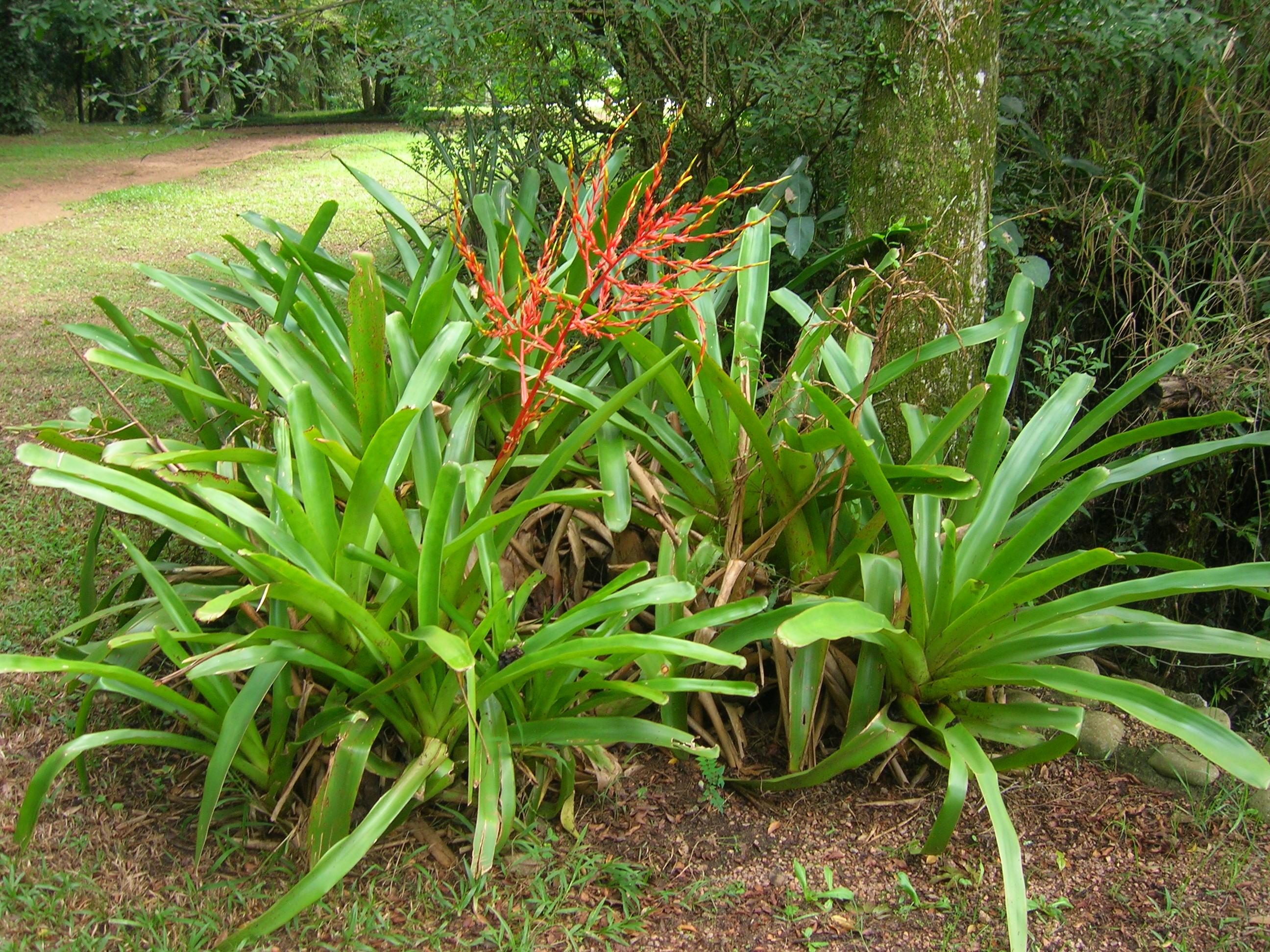 File:Planta Jardim Bot?nico Porto Alegre.JPG - Wikimedia ...