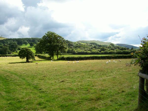 File:Sheep grazing - geograph.org.uk - 532358.jpg