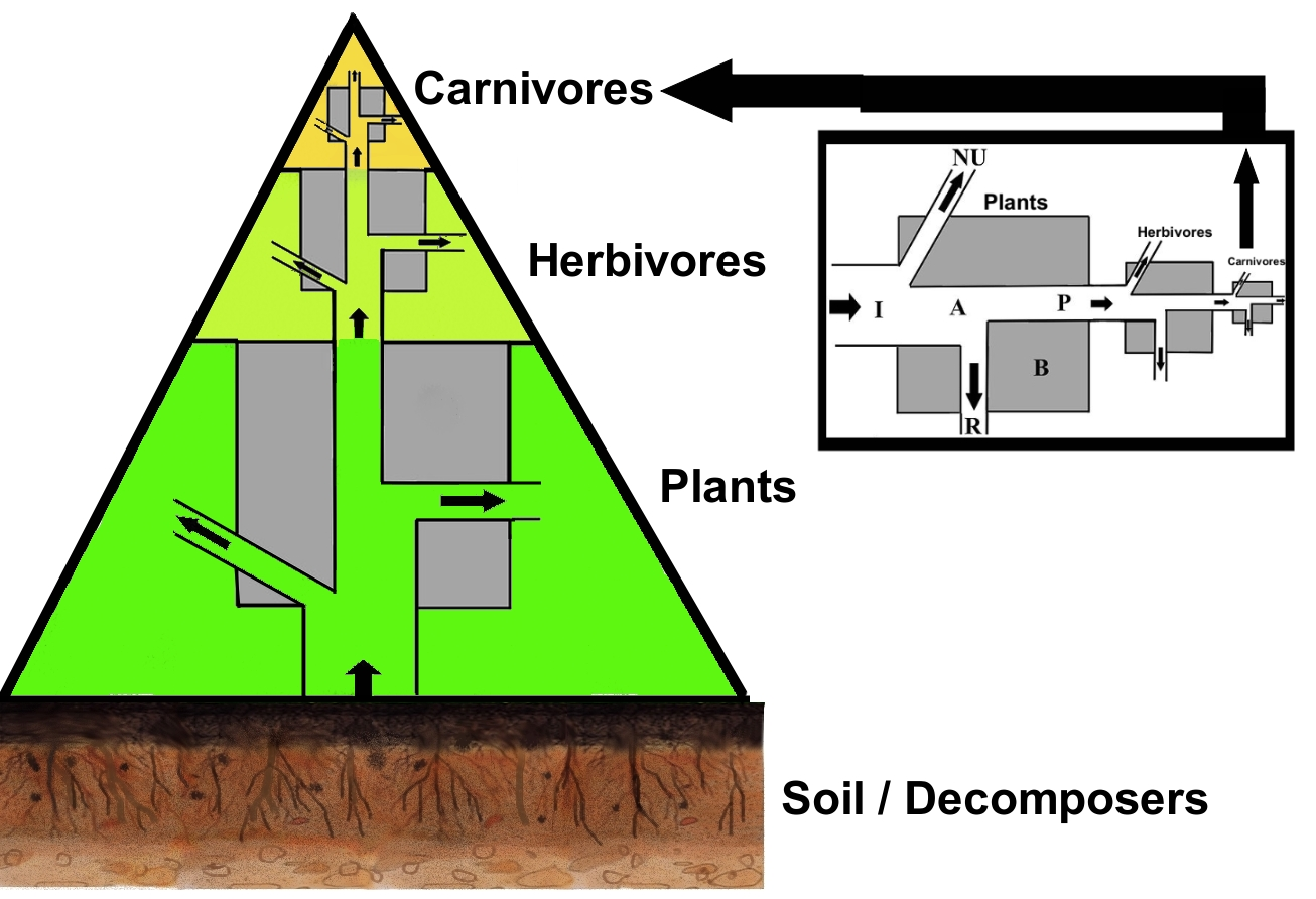 Soil Flow Chart: TrophicEnergy.jpg - Wikimedia Commons,Chart