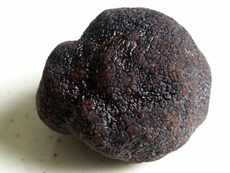 trufla czarnozarodnikowa (Tuber melanosporum)