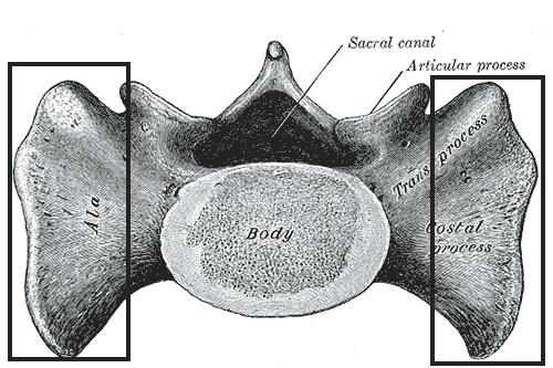 töltse ki az aszcaris szervek rendszerének táblázatát