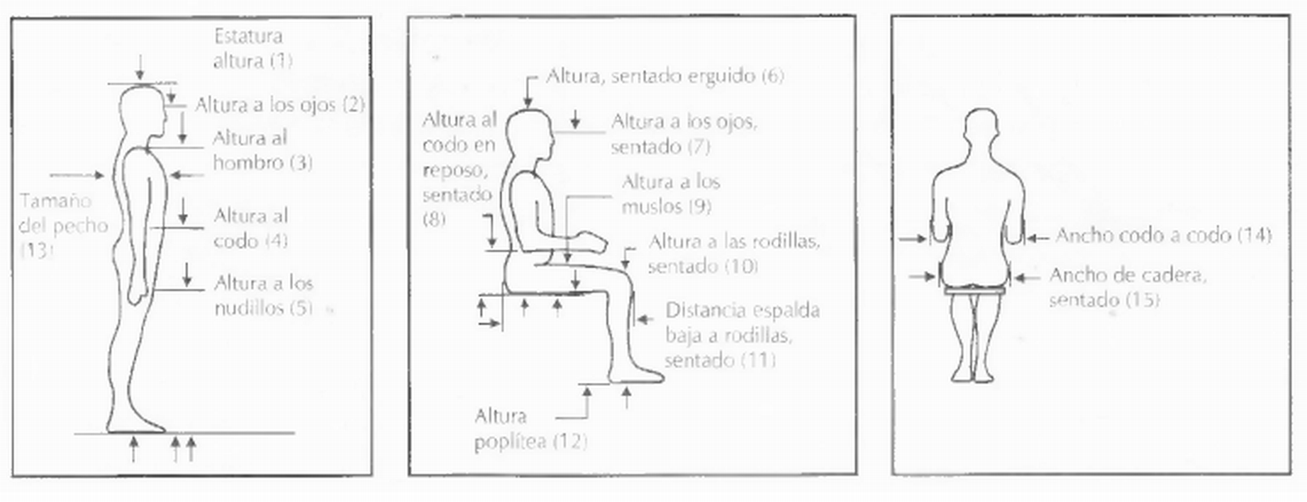 File:Antropometria.png - Wikimedia Commons