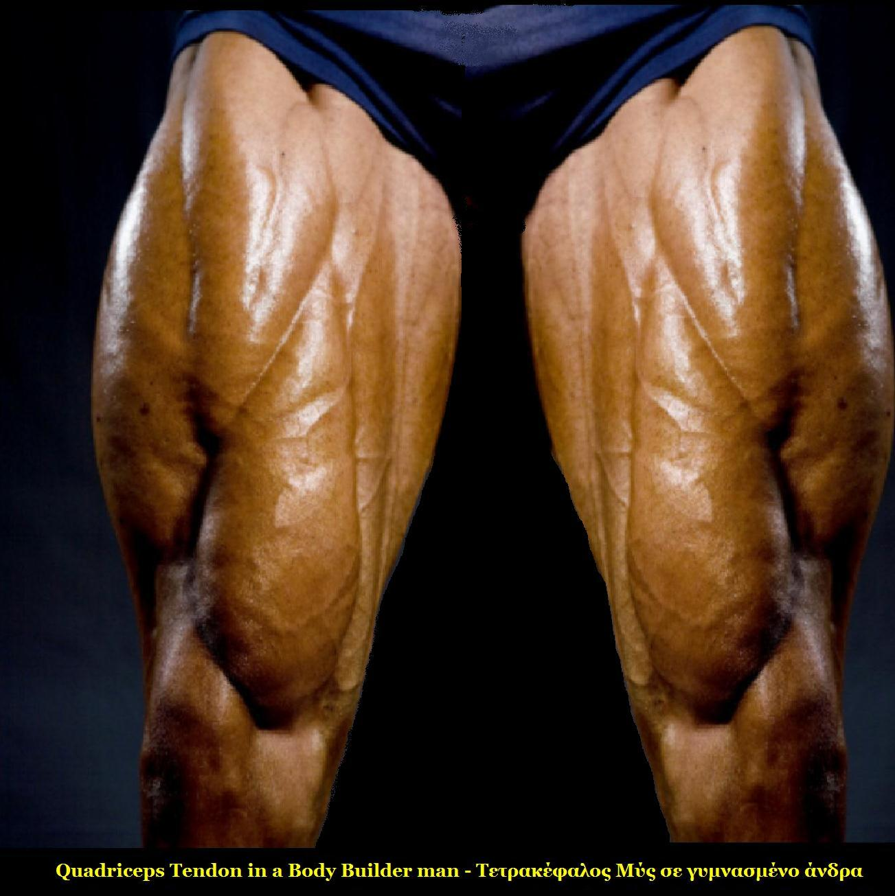 File:Body Builder Quadriceps.jpg - Wikimedia Commons