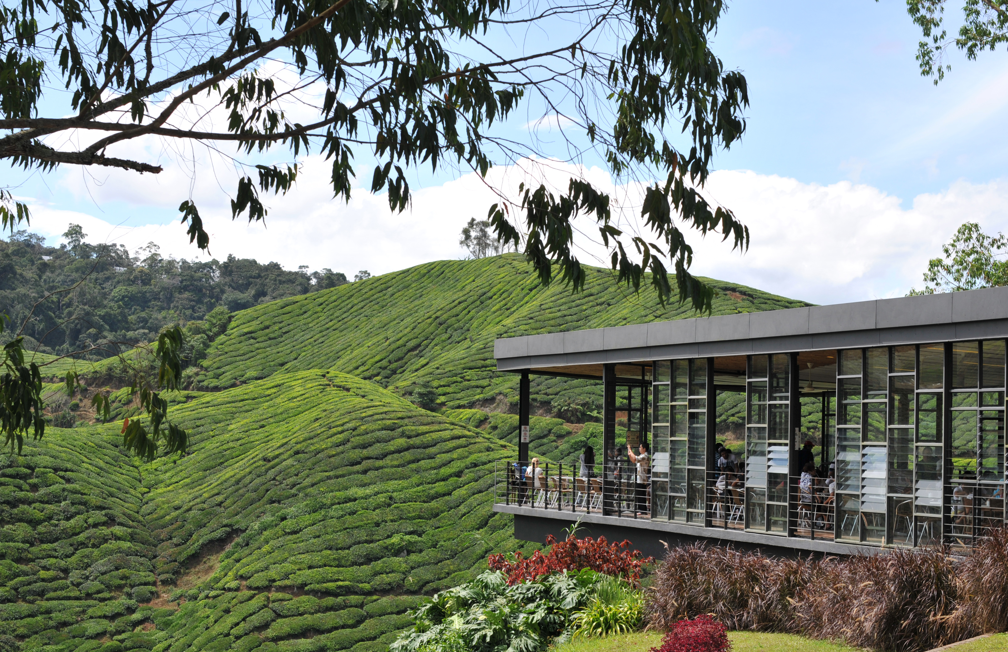 cameron highland A resort above all located exclusively on her own hill as the highest resort in cameron highlands strawberry park resort is an ideal retreat for holidays maker and business travellers alike.