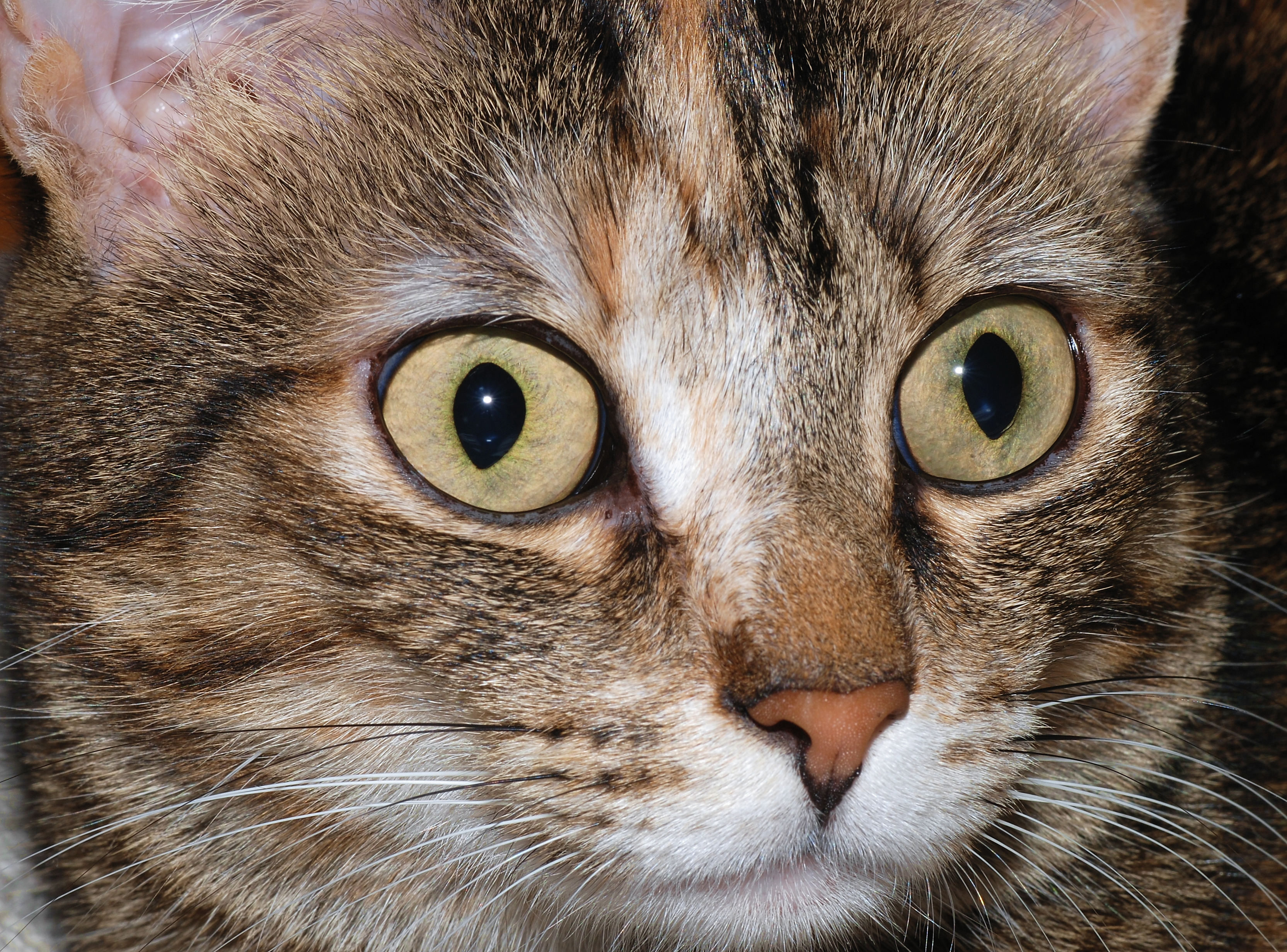File:Cat eyes 2007-1.jpg - Wikimedia Commons