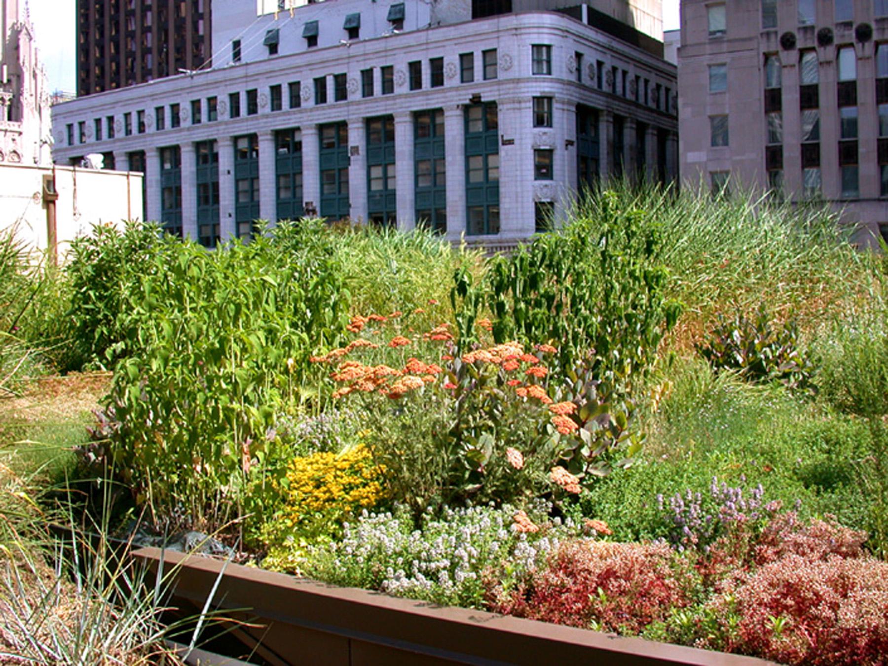 Landscape Design Build Companies