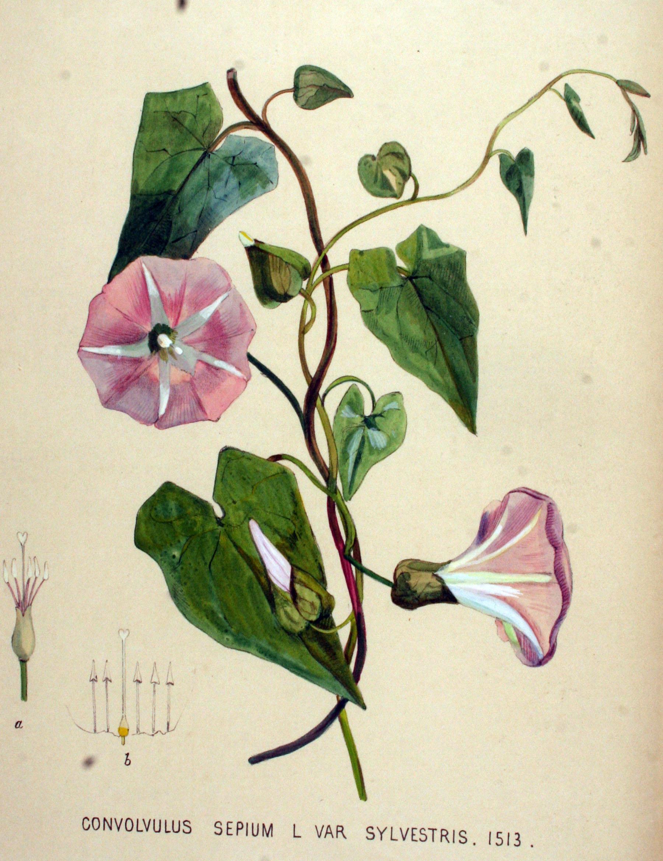 100 Flowers - 100 Years Of Pulchritude