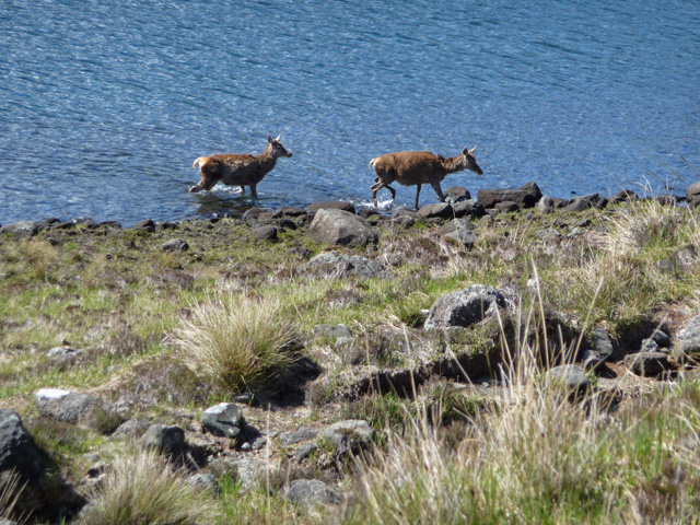 Cooling down in Loch Coruisk - geograph.org.uk - 1301620