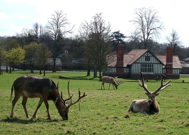 Deer in front of Park Farm, Woburn Abbey - geograph.org.uk - 775683