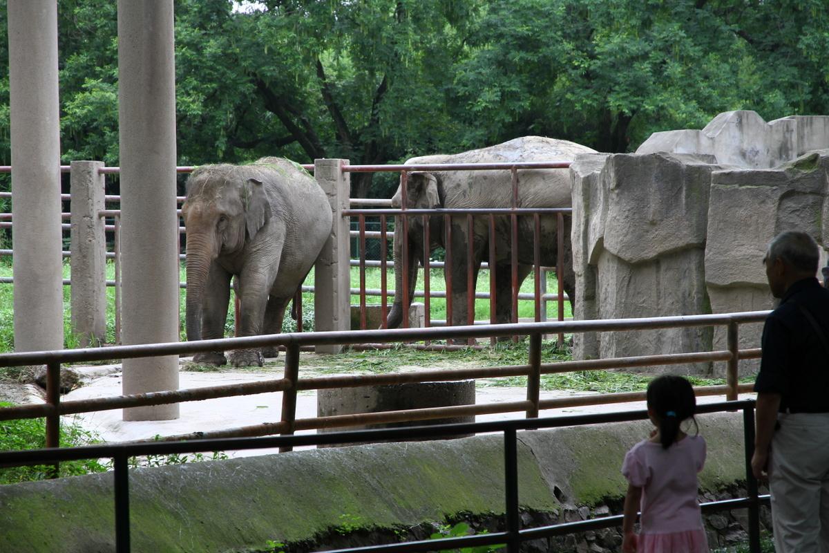 http://upload.wikimedia.org/wikipedia/commons/2/27/Elephant_in_Shanghai_Zoo.JPG