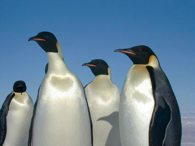 Space Satellite Used to Count Penguins on Earth
